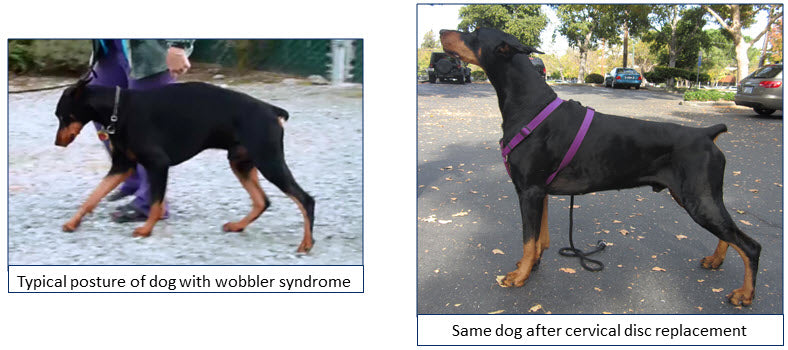 Cervical Disc Replacement in Dogs
