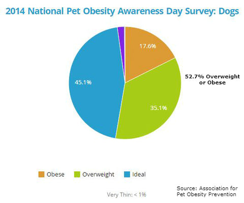 Dog Obesity Rates 2014