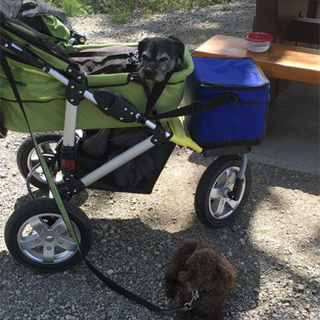 Happy Tails - Kobe and his Dogger stroller