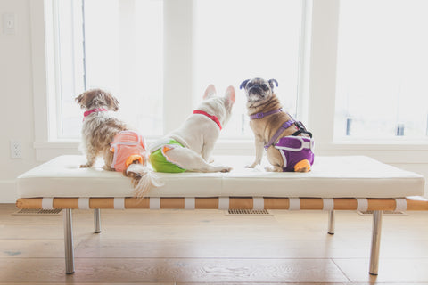 dogs in Dog Quality Diapers