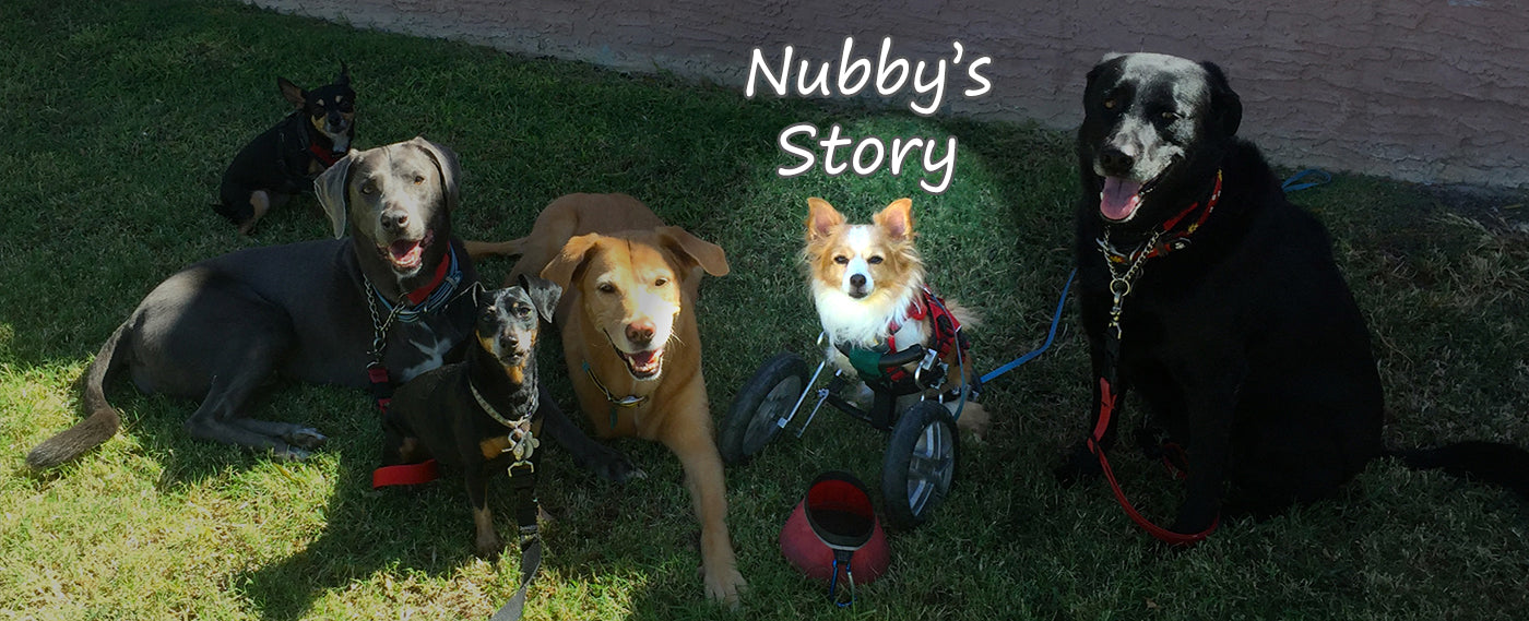 Happy Tails - Nubby's Story