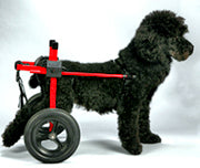 Dog Wheelchairs help dogs walk again