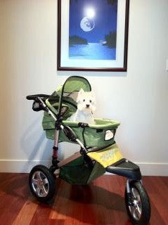 5 Creative Ways to Use a Pet Stroller
