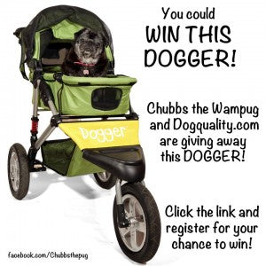 Chubbs the Wampug wants you to win a Dogger stroller