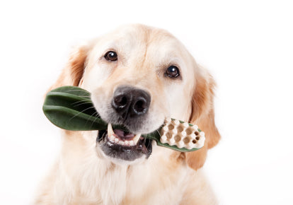 Dental Health In Older Dogs Dog Quality