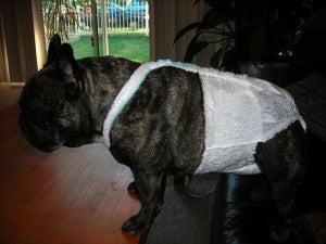 Premium Disposable Dog Diaper Review - Are they Worth the Money?