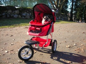 Dog strollers help older dogs with trouble walking