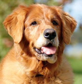 Improving the Health of your Older Dog through Supplements
