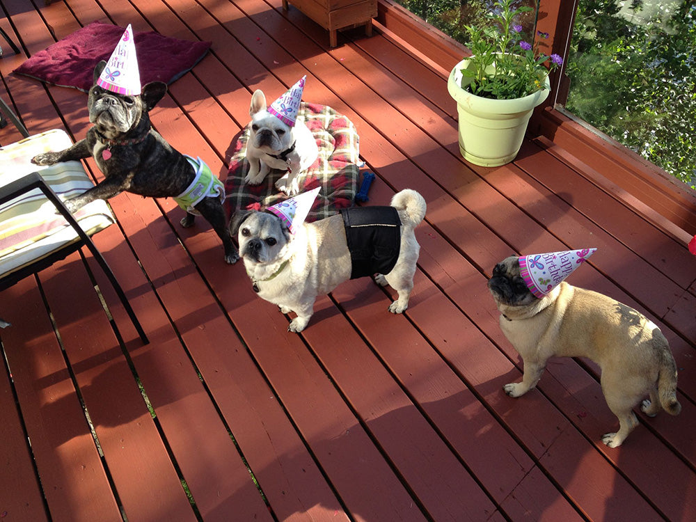 Dog Party Ideas