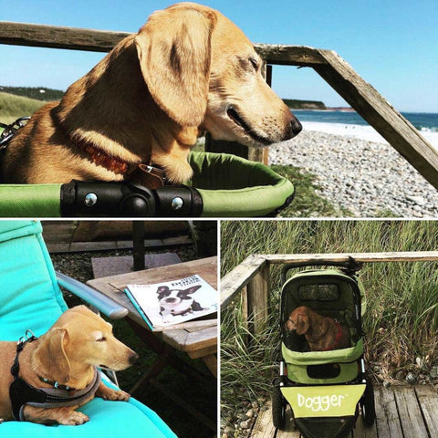 Cherished Hound at the beach in her Dogger™