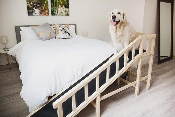 Gentle Rise™ Bed Ramp | Dog Quality