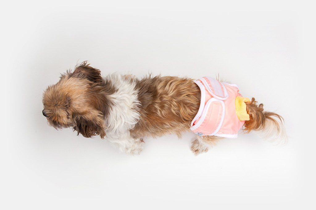 Washable Wonders Dog Diapers Female Dog Quality