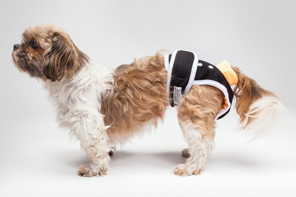 fecal incontinence in dogs
