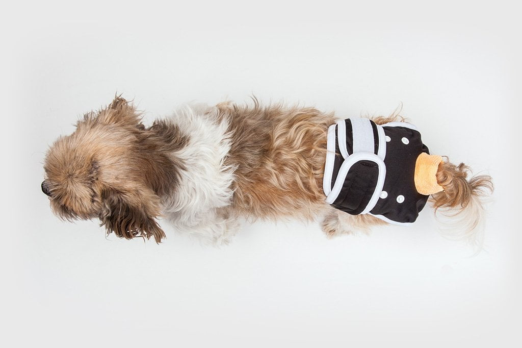 Male Washable Dog Diapers to Manage Dog Incontinence | Dog Quality
