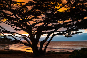 Cypress Tree Sunset