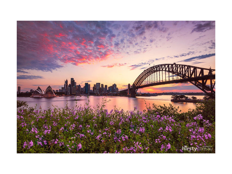 Flowers, Sydney Harbour