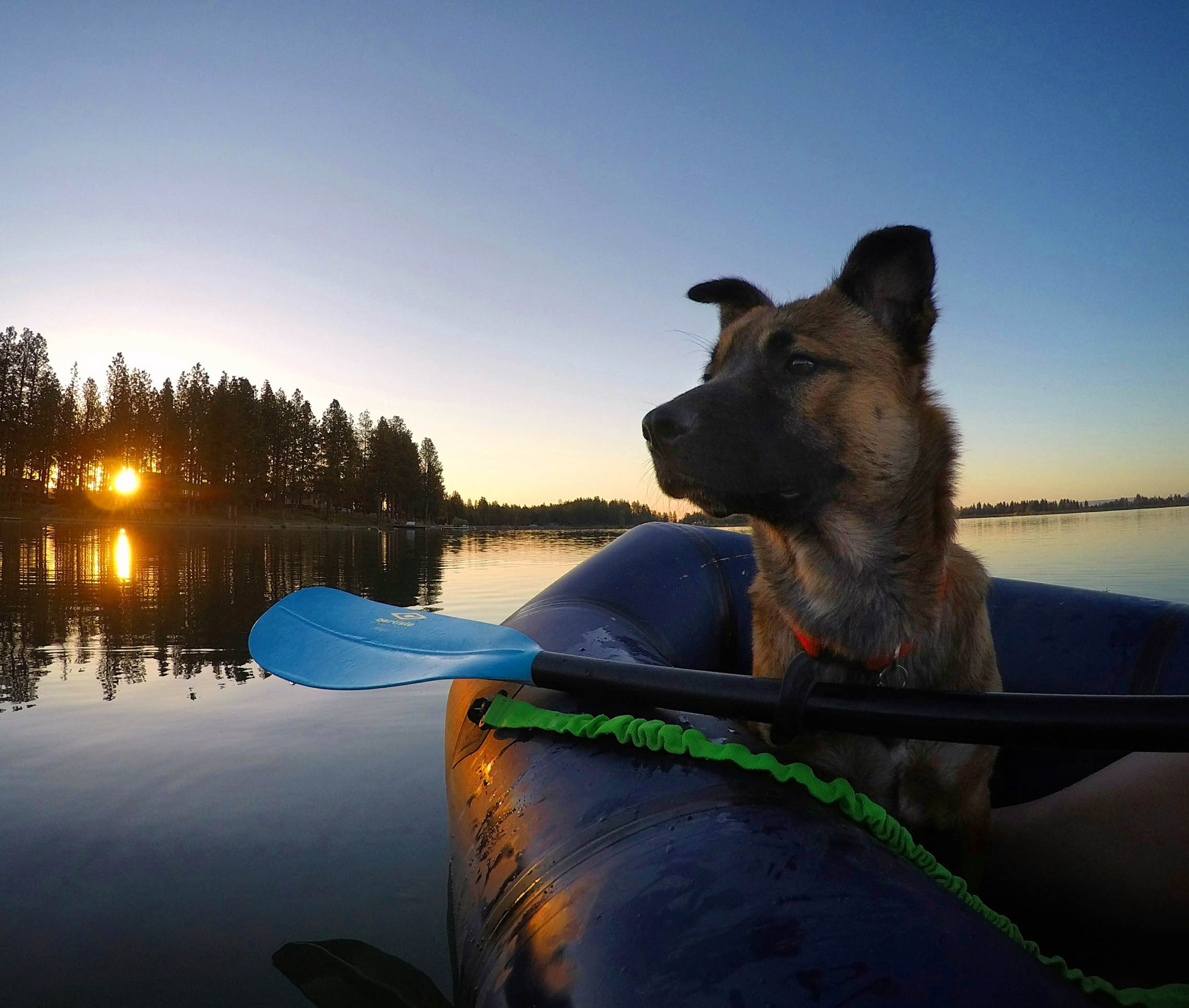 Dog in a packraft at sunset.