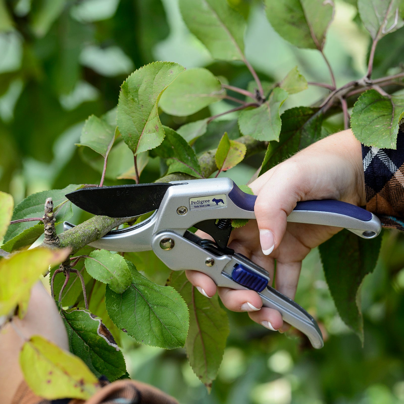 Power Ratchet Pruner