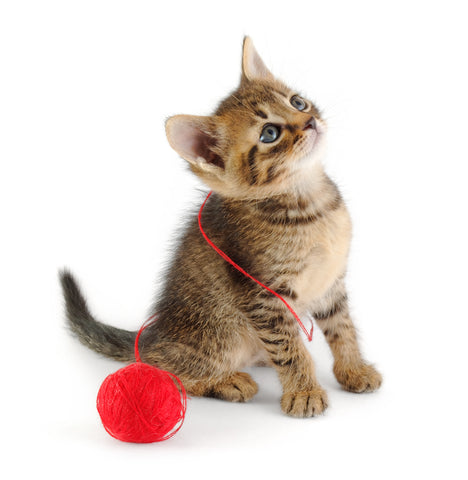 Kitten with String