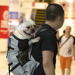 Clearance Price-49.86 Last day-Frenchie Backpack