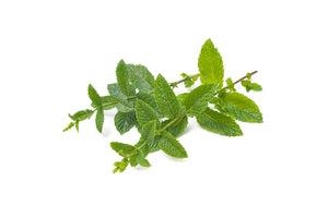 Mint-001-Fresh Veggies SG Fresh Vegetables Online Delivery in Singapore 薄荷
