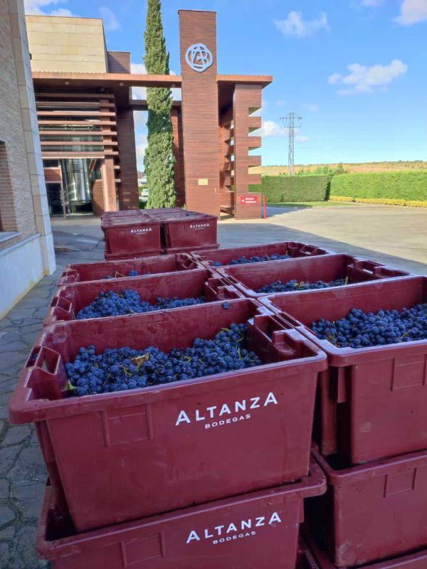 Containers of red grapes at the Bodegas Altanza winery in Rioja, Spain