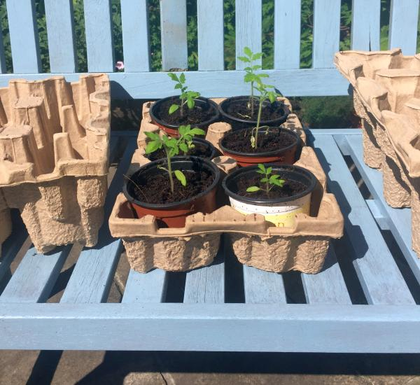 Sustainable Pulpsafe wine packaging reused as a container for garden pots