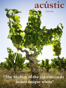 The wisdom of Montsant's old vineyards