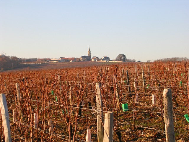 Champeau vineyards in winter, Pouilly-Fumé