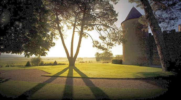 Shadows cast by a tree at Château d'Yquem