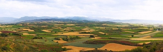 View over the Don Sancho de Londoño vineyards