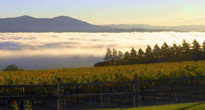 Fog in the valley, mountains behind and vineyards in front