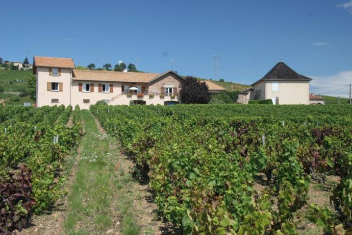 View uphill to house in vineyard