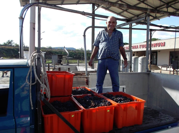 Grape delivery at Cantina Tudernum