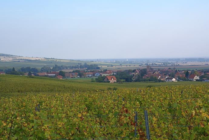 View of Bergholtz village across vineyards