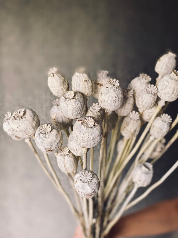 Preserved/dried Poppies: natural or whitewashed