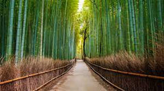 Facts about bamboo
