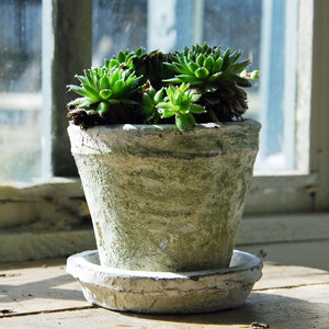 Small antiqued white stone plant pot with saucer