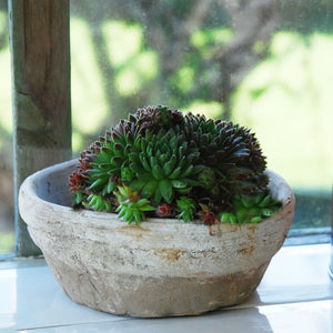 Small shallow flat whitestone plant dish