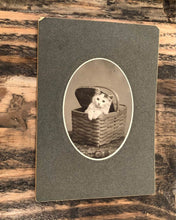 Load image into Gallery viewer, Antique Circa 1900 Cat / Kitten Cabinet Photo