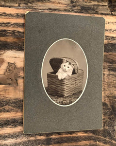 Antique Circa 1900 Cat / Kitten Cabinet Photo