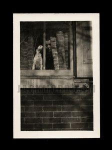 Unusual & Mysterious Vintage Snapshot Photo - Face in the Window (with Dog)