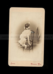 antique 19th century cdv photo of a cute spaniel dog on chair / wisconsin 1800s