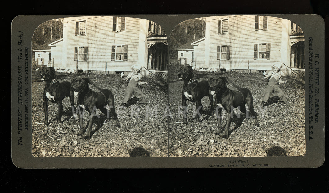 Antique 3D Photo Stereoview Boy & Two BIG Great Dane DOGS - Rare One?