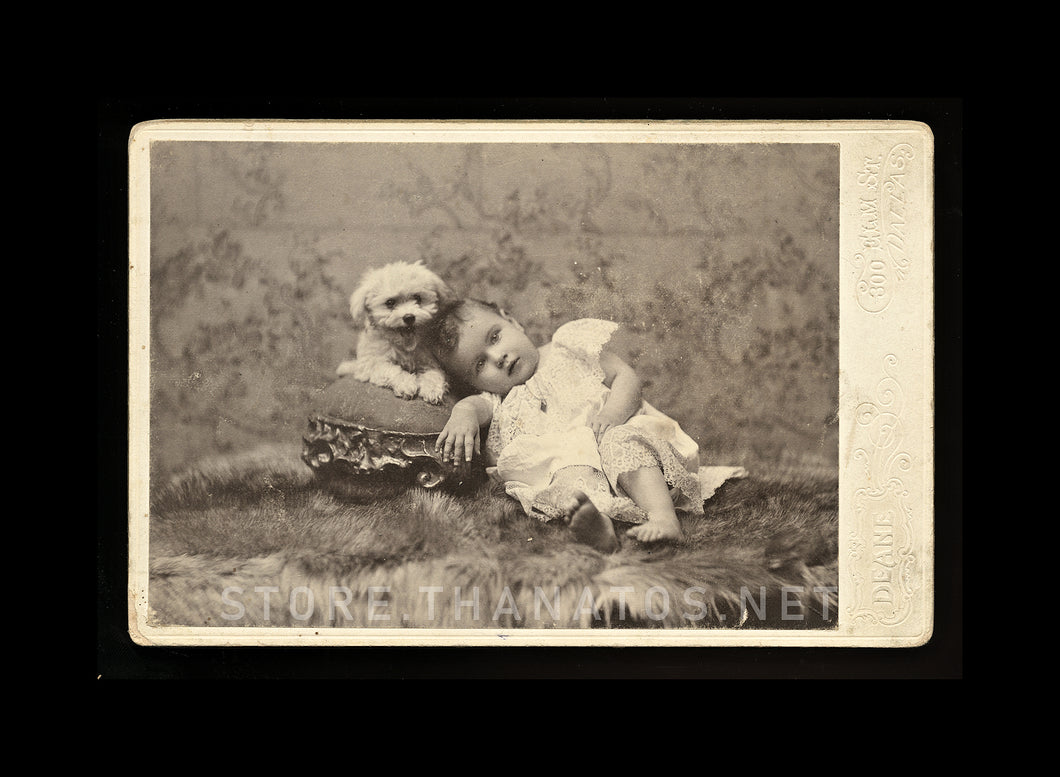 1890s Photo Little Girl & Extremely Happy Poodle? Dog! Dallas Texas Photographer