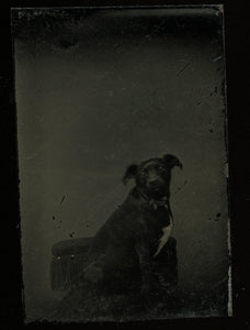 Miniature Gem Tintype Photo Cute Little Dog In Chair 1860s 1870s