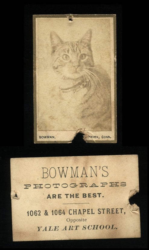 Rare Format Miniature CAT CDV Photo - Yale Art School 1880s