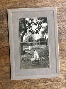 Antique 1900s CAT Cabinet Photo - Posed Alone Outside On Stool