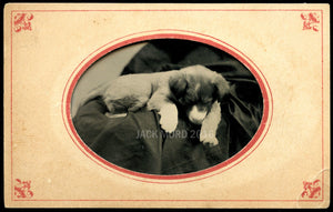 Antique 1870s Tintype Photo Sleeping or Post Mortem Puppy Dog & Hidden Mother