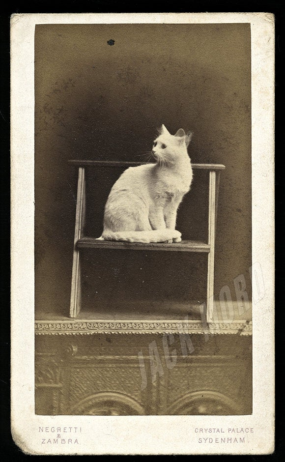 Rare 1860s CDV Photo Moving White CAT by Crystal Palace London Photographers